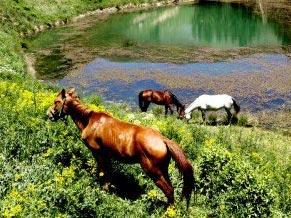 منطقه سیلوانا تکه ای از بهشت در ایران