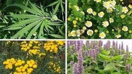 جزوه اهلی سازی گیاهان دارویی