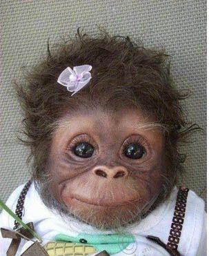 خوشت مشتل از نوع میمون