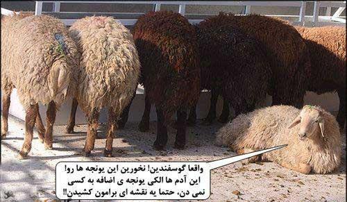 اینم از گوسفند
