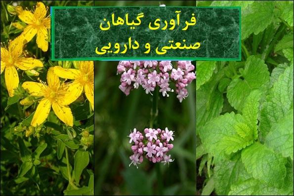 جزوه فرآوري گیاهان صنعتی و دارویی