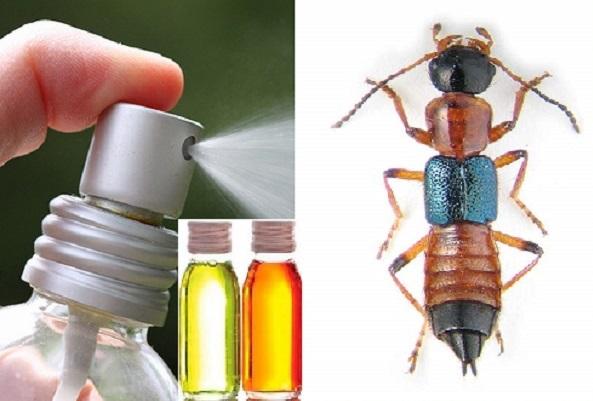 مقاله اثر حشره کشی اسانس برخی گیاهان دارویی علیه حشرات