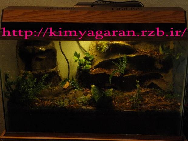 آموزش واقعی  ساخت ویواریوم گیاهی همراه دوزیستان همراه عکس