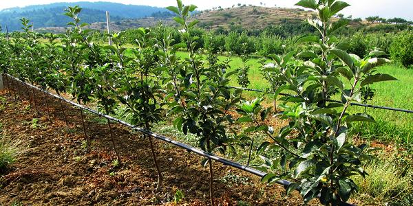 آبیاری درختان میوه