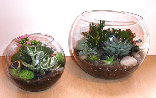 روش های ساخت تراریوم گیاهی