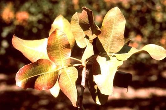 کمبودها و بیشبودهای در درختان میوه