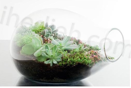 گیاهان مناسب تراریوم