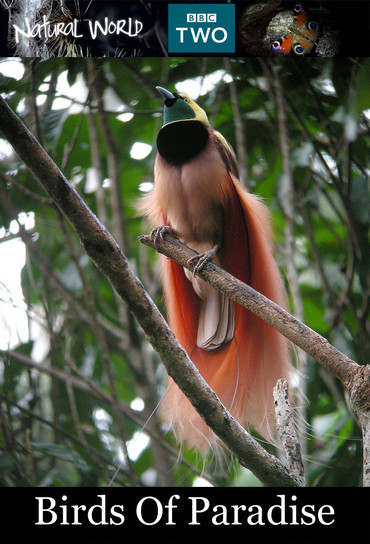 دانلود مستند Birds of Paradise 2010