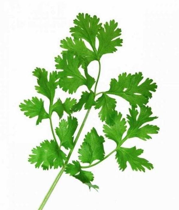 گشنیز نوعی سبزی با نام علمی Coriandrum sativum است. این گیاه بومی جنوب غرب آسیا و شمال آفریقا است و ارتفاع آن تا نیم متر هم میرسد.