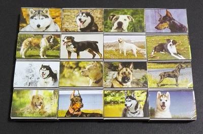 سگها (1).jpg (400×265)