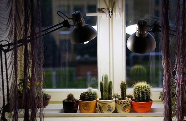 رشد کاکتوس در نور مصنوعی