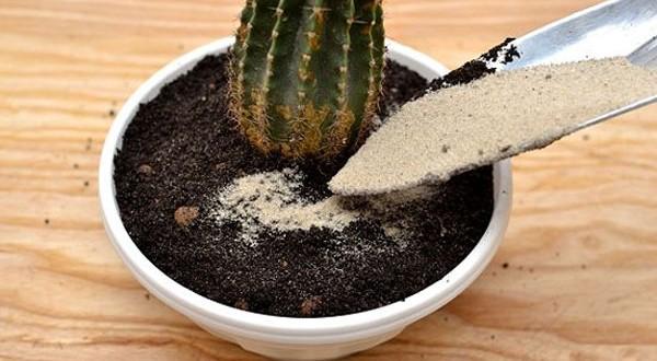 خاک کاکتوس