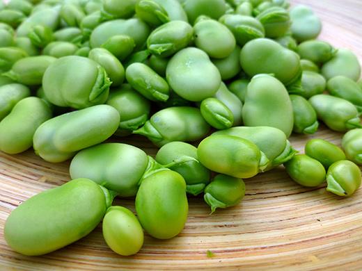 خواص باقلا :Faba bean