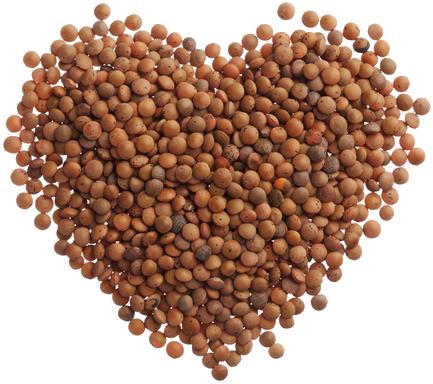 خواص دارویی و غذایی  عدس : Lentil