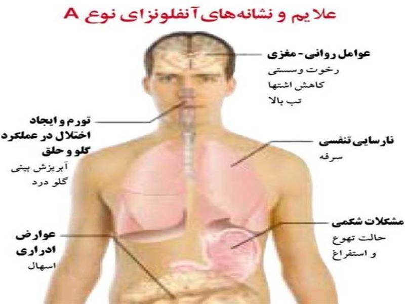 ویروس آنفلوآنزا