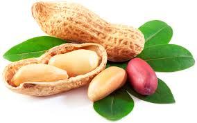 بادام زمینی :  Peanut تركيبات شيميايي/خواص داروئي/طرز استفاده/مضرات...