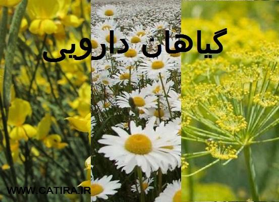 جزوه گیاهان داروئی