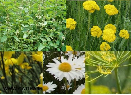 جزوه تولید و فرآوری گیاهان دارویی