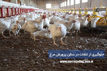 آموزش پرورش مرغ