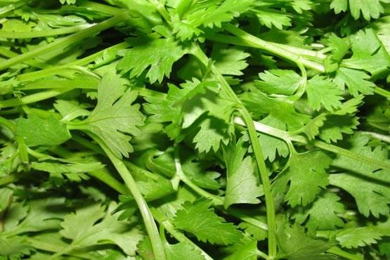راهنمای کاشت ۶ نوع سبزیجات در خانه و آپارتمان