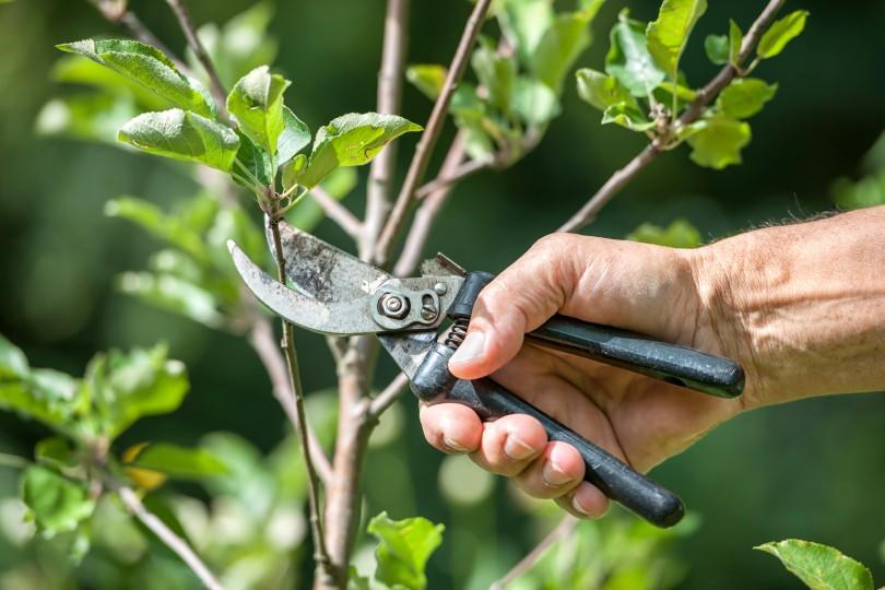 آموزش پیوند زدن در درختان میوه