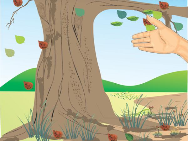 نحوه تعیین سن درختان