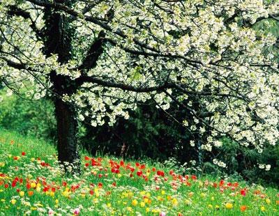 انشا در مورد فصل بهار
