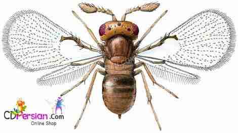 بيولوژي و اكولوژي زنبور تريكوگراما