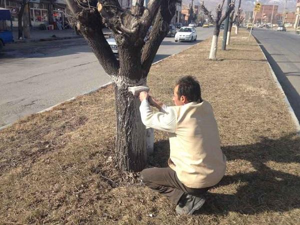تزریق درختان در ایران
