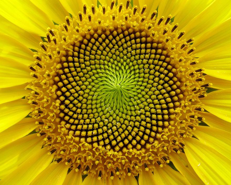 عکس هایی شگفت انگیز از حالات هندسی در گیاهان