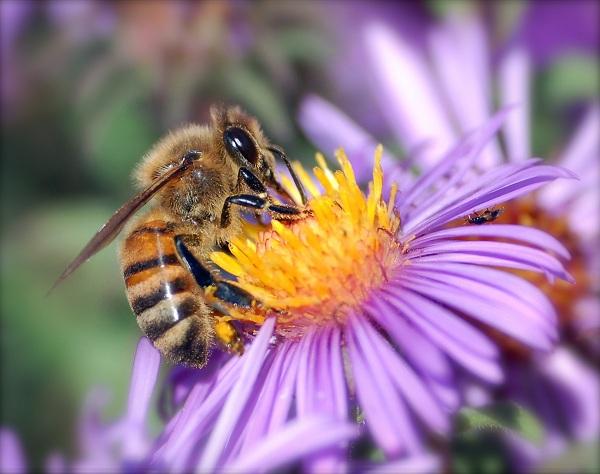معرفی کردن ملکه جدید به کلنی  زنبور عسل
