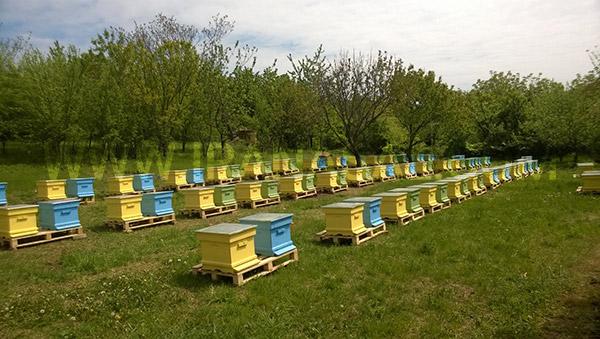 انتخاب محل زنبورستان