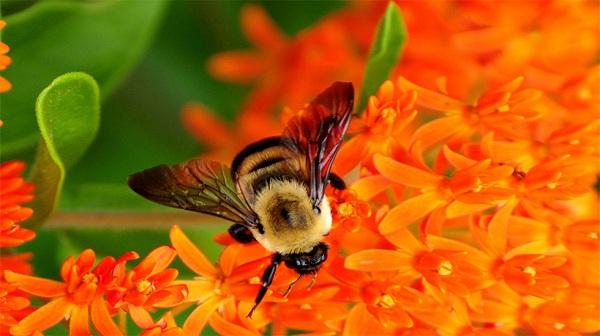 انتخاب قندها برای تغذیه زنبور عسل