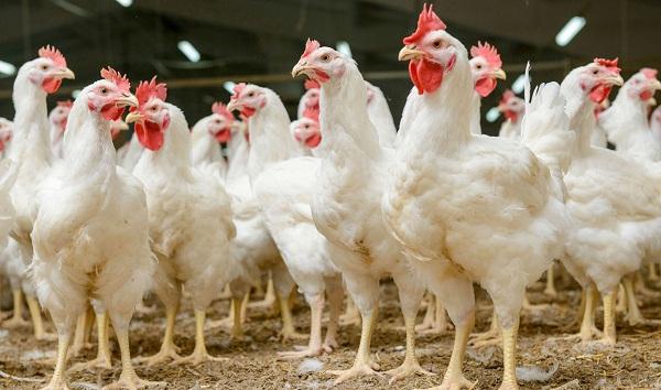 5 راز فرمولاسیون پیشرفته خوراگ دام و طیور در مورد مواد معدنی