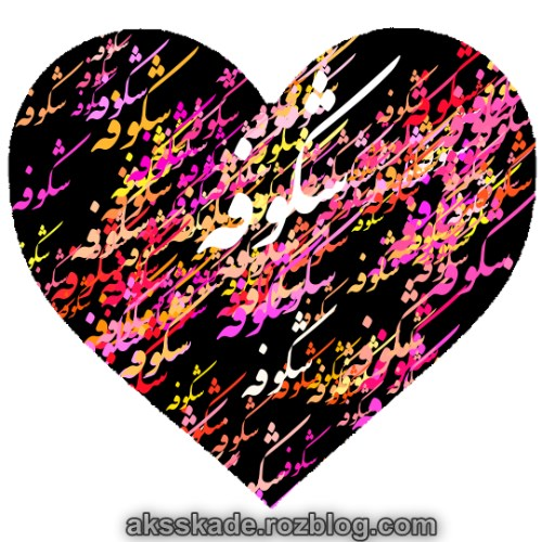 طرح قلبی اسم شکوفه - عکس کده