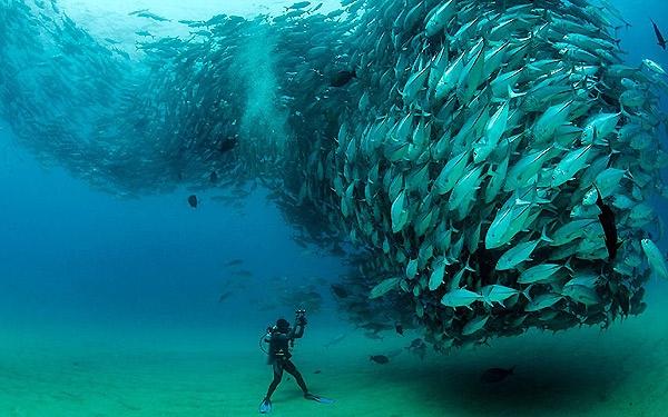 رفتارهای متداول گله بندی در آبزیان