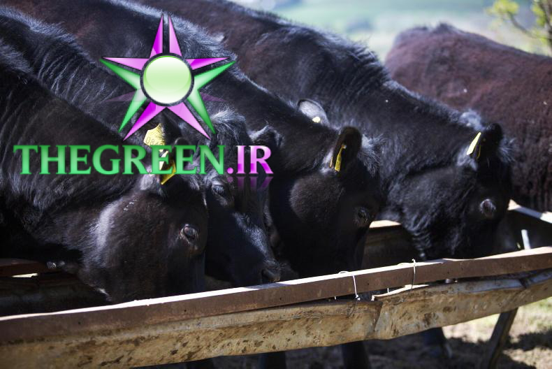 How much are you paying for... weanling feed?