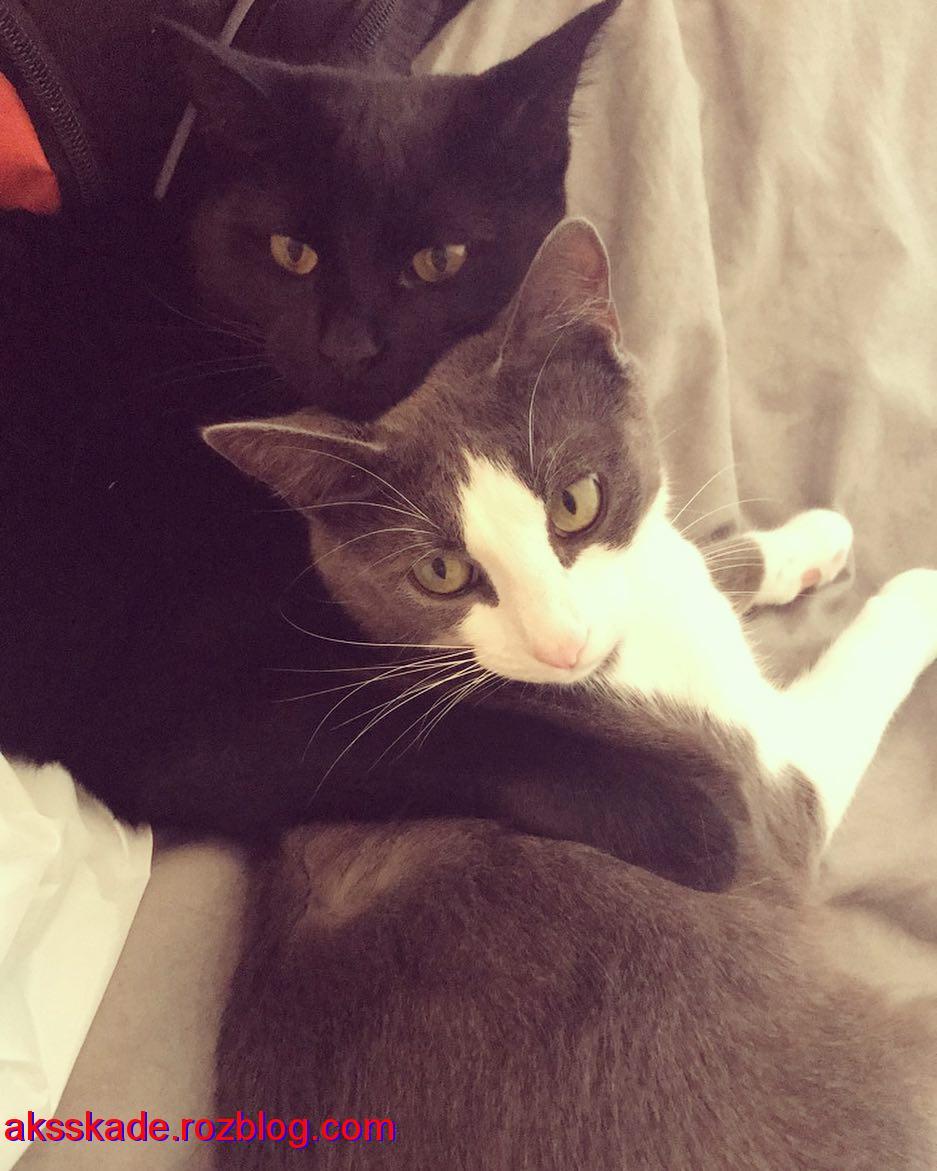 عکس های گربه (Cat photos)