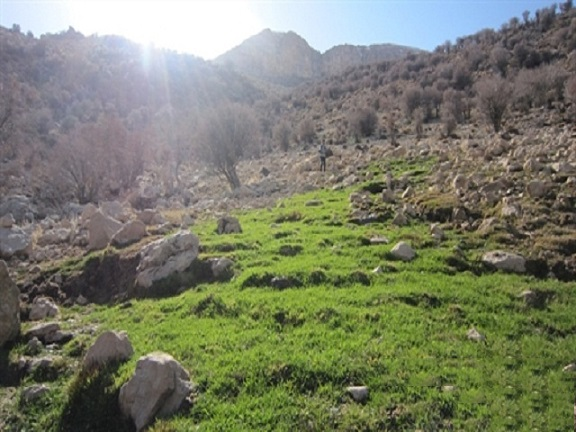 گردشگاه چشمه فیلی