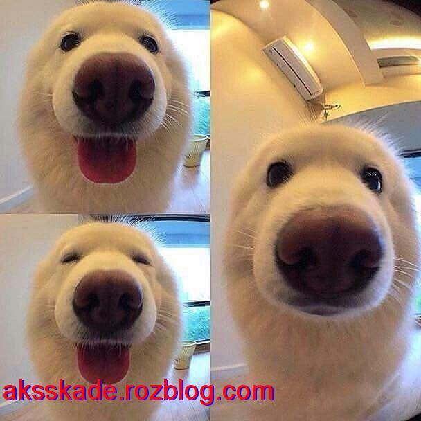 عکس های سگ (Dog photos)