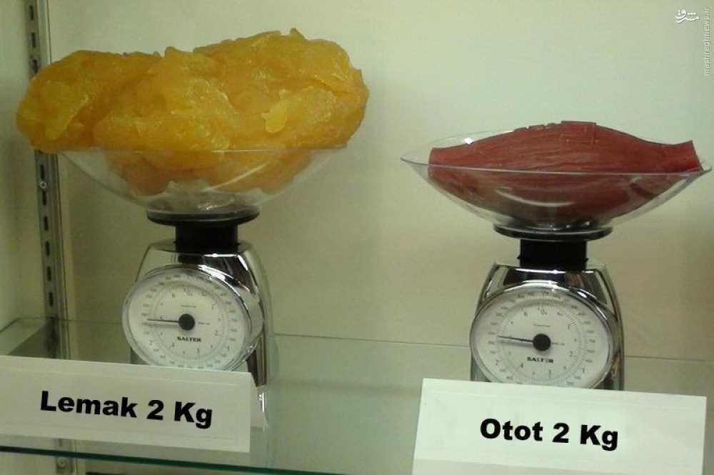 مقایسه چربی و عضله در شکم