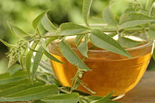خواص برگ سنا برای لاغری - چای برگ سنا - دمنوش سنا