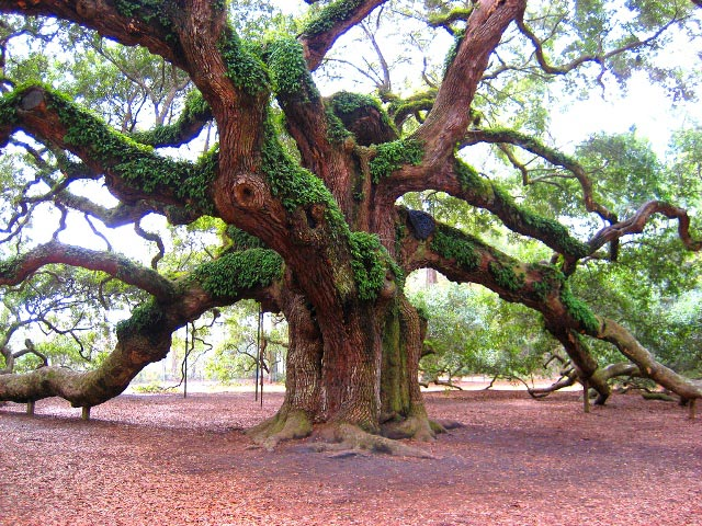 انشا در مورد درختی با ویژگی های پا در هوا
