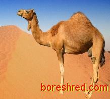 داستان انگلیسی 2 /شتر/The Camel