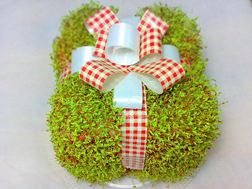 سبزه به شکل جعبه کادو,آموزش سبزه هفت سین مدل جعبه کادو