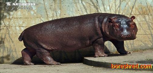 داستان انگلیسی4  / اسب آبی/The Hippopotamus
