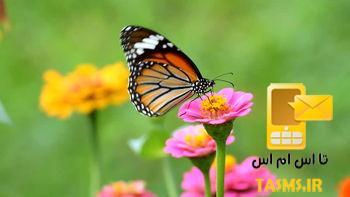هجوم پروانه ها به تهران ایا خطرناک است ؟ ماجرای حمله پروانه ها به تهران