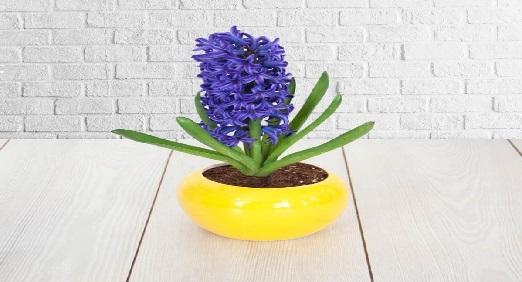 داستان انگلیسی 12/The Water Hyacinth/ سنبل آبی