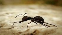دانلود انیمیشن زندگی خصوصی حشرات 2006 - قسمت 18 - پلی بر روی رودخانه