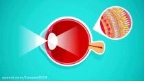چشم انسان از چه چیزهایی تشکیل شده؟